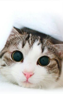 Alasan Kenapa Kucing Noleh Dipanggil Pus ngUNIK.com kucing